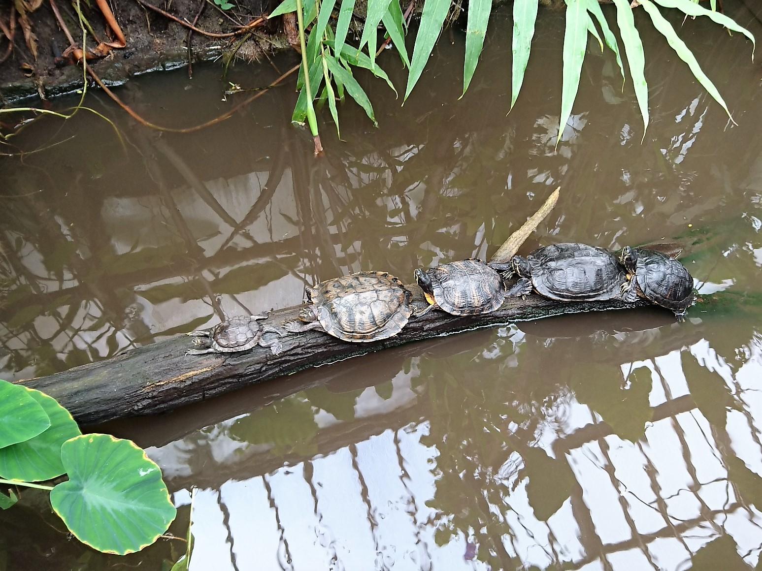 Vlinders schildpadden