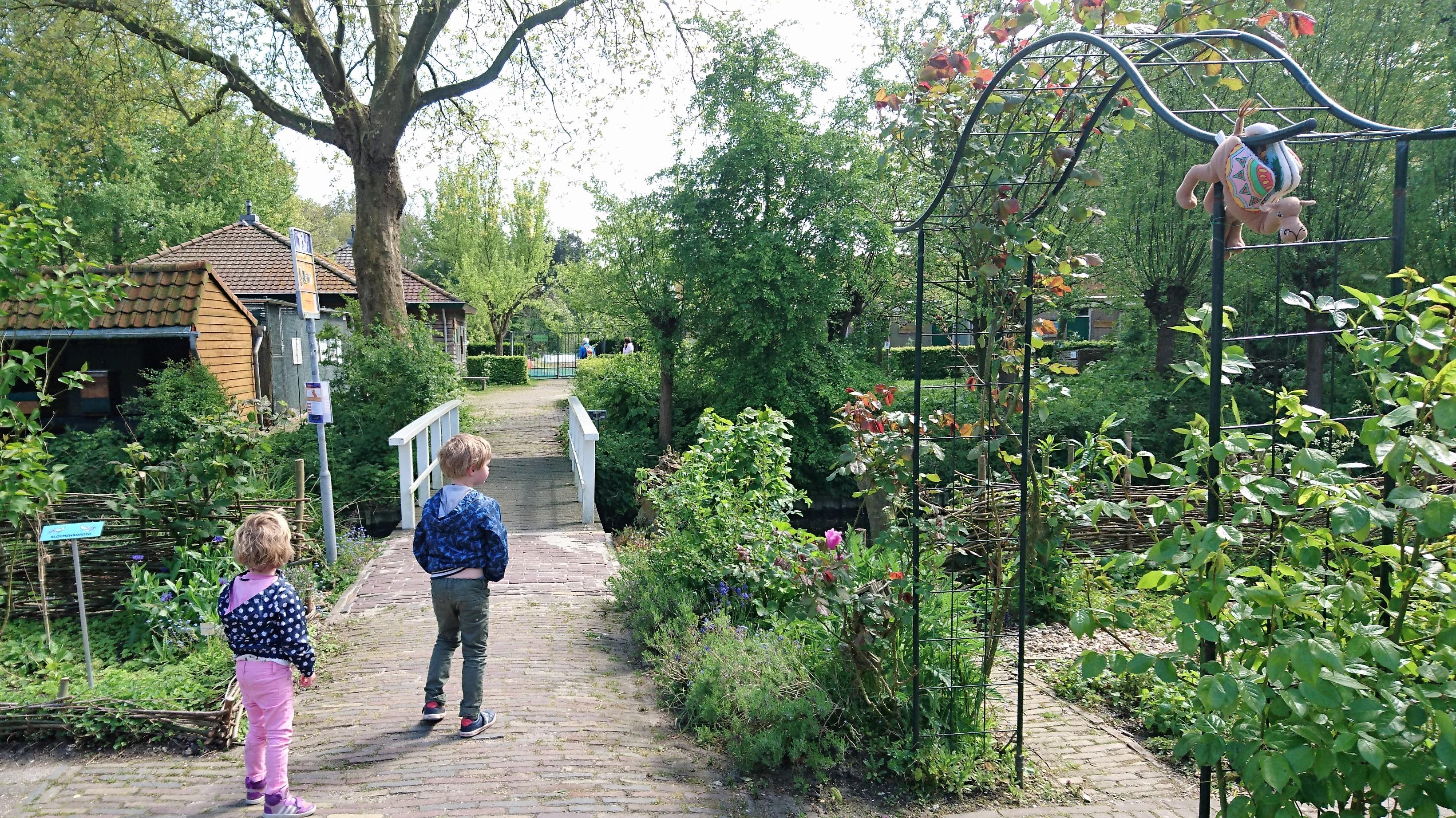 Papaver Delft (1)