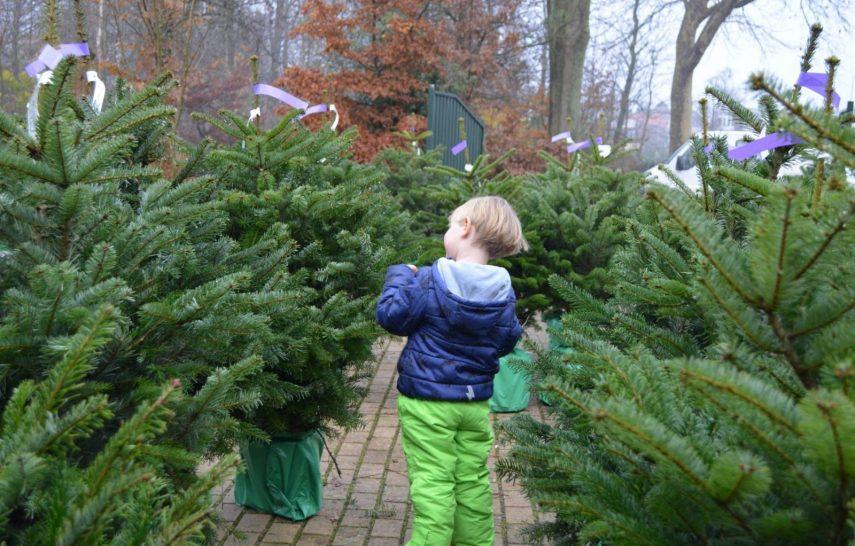 dorrepaal kerst hofpas