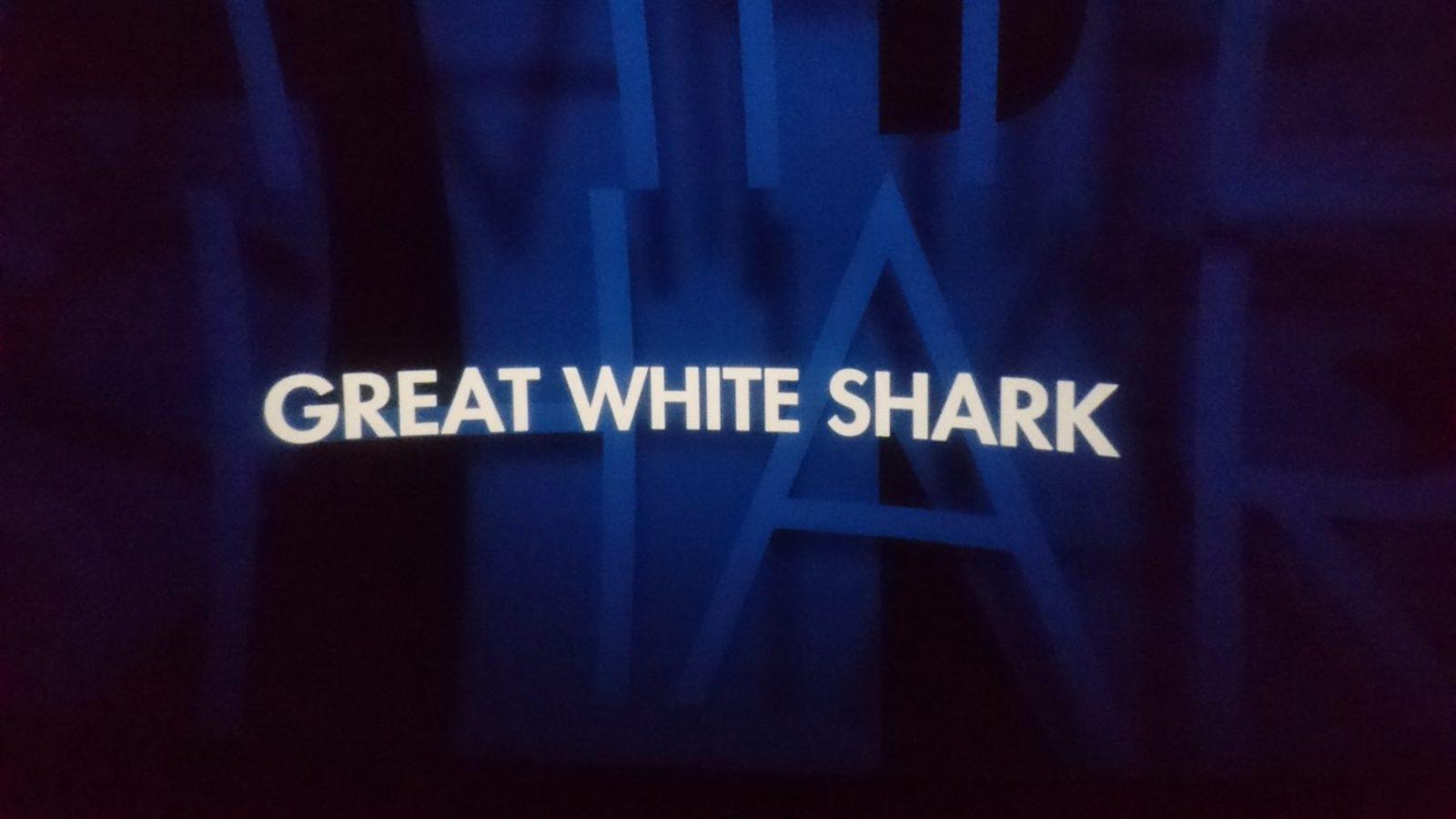 Omniversum Haaien