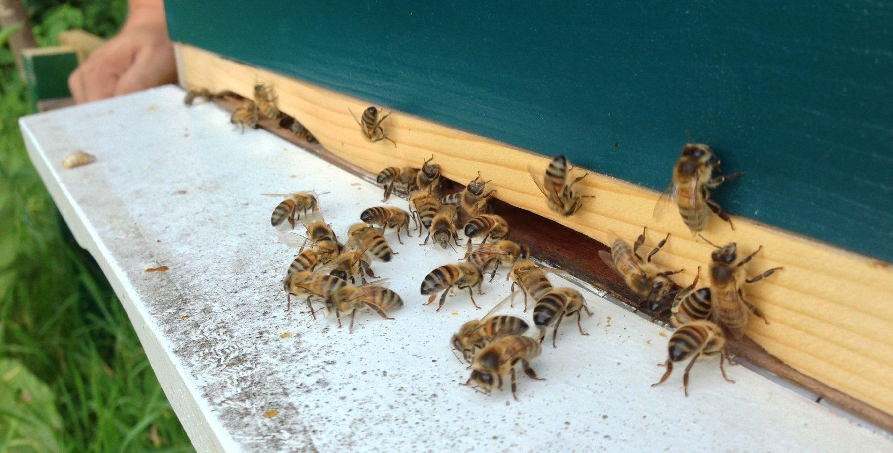 Parade - bijen