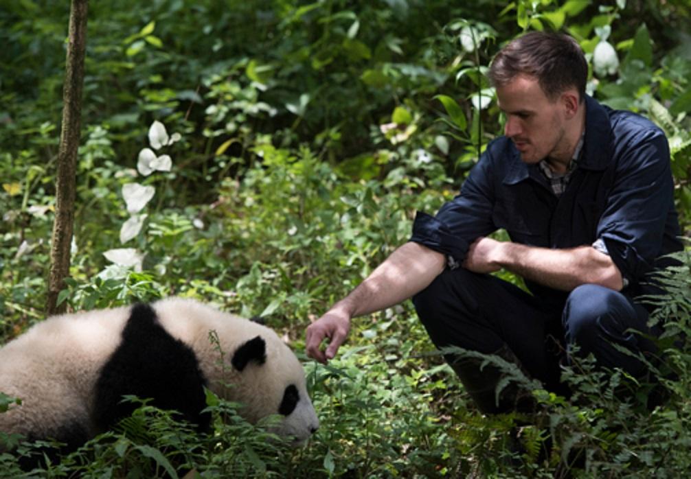 Panda met verzorger