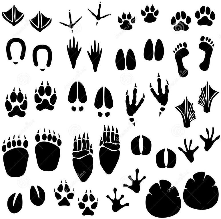 dierenspoor